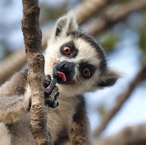 Backyard Gardens Illegal Native Animals In Madagascar Video Search Engine At