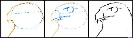 how to draw a hawk how to draw a hawk tailed hawk step 2