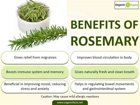Medicinalcosmetic Uses Of Rosemary by 26 Impressive Benefits Of Rosemary Organic Facts