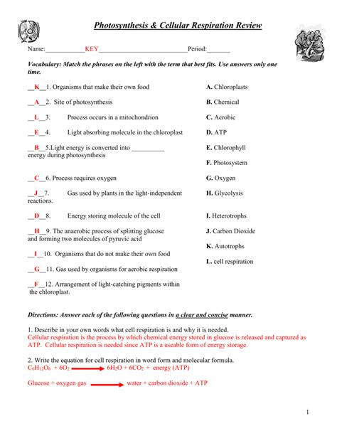 Cellular Respiration Worksheet by Photosynthesis And Cellular Respiration Worksheet Answers