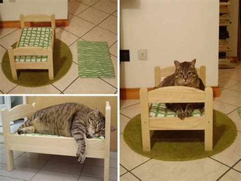 Cat Room Ideas by Cat Room Design Best Home Design Ideas