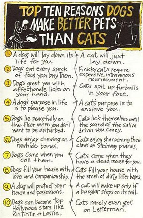 why dogs are better than cats dogs better than cats 6 clicky pix