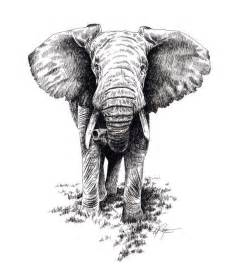 25 best ideas about elephant head drawing on pinterest