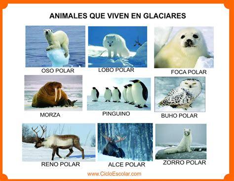 imagenes animales que viven en el bosque animales que viven en el bosque selva mar r 237 os