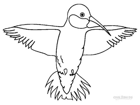 printable coloring pages hummingbirds printable hummingbird coloring pages for cool2bkids