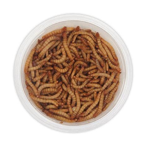 live mealworms lmw rwbf co