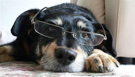 ocular manifestations  dog cataracts part  adw diabetes