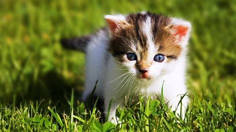 wallpaper baby and cat baby animal wallpaper hd images one hd wallpaper
