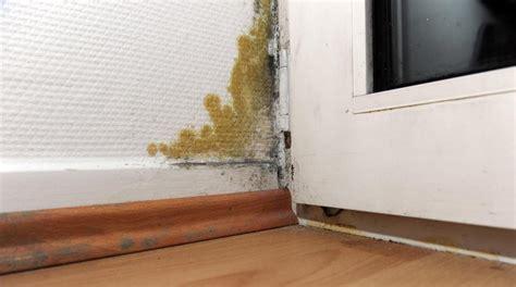 schimmel in der wohnung gesundheit mykotoxine versteckter schimmelpilz kann bewohner krank