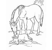 Coloring Pages For Kids Horse