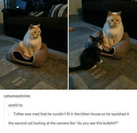 Funny Cat Memes Tumblr - 25 best memes about cat cat memes
