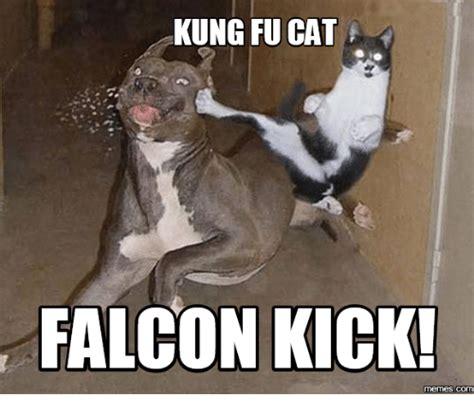 Fu Meme - kung fu cat falcon kick memes kung fu meme on sizzle