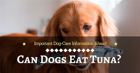 can dogs eat canned tuna can dogs eat tuna important care information ahead
