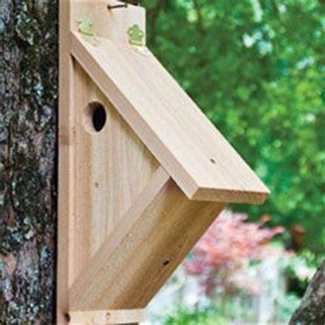 1000 images about back yard birding on pinterest wild