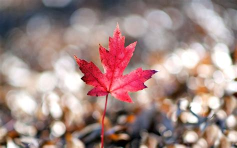 leaf beautiful wallpapers wallpaper high definition