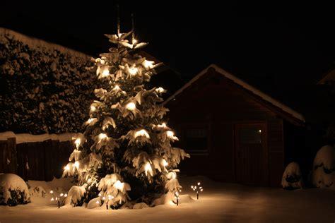 sch 246 ner weihnachtsbaum foto bild jahreszeiten winter