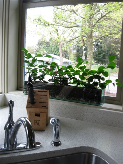 Window Sill Planter Indoor Indoor Plants Julie Howe Gwinn S