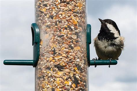 top 10 backyard bird feeding mistakes