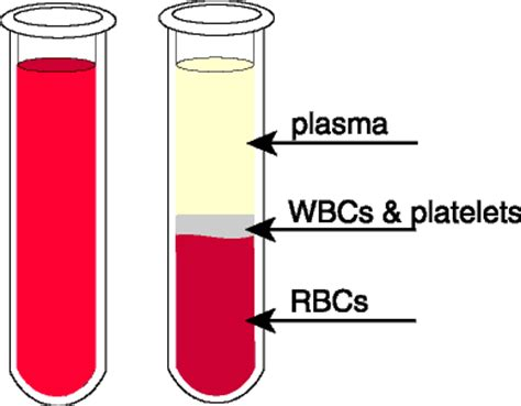 which blood component gives blood its color anatomy of blood for health jon barron newsletter