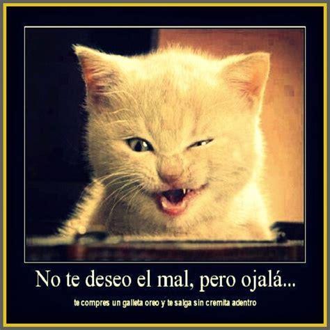 imagenes chistosas gatos imagenes chistosas de gatos con frases imagenes