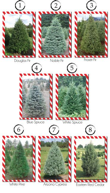 visit a christmas tree farm and cut your own tree news