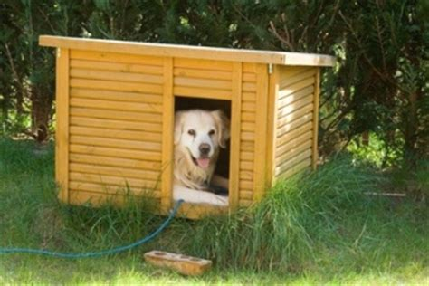 how to dogs to not in the house help my will not go in his house
