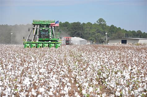 Uga Find Uga Student Surveys Cotton Industry To Find Sustainability Of The Crop Growing