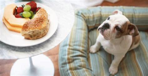 alimenti x cani alimenti tossici per cani 10 alimenti che potrebbero