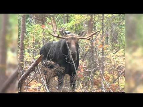 lhomme panache classique yukon 4 part 2 youtube chasse de l orignal doovi