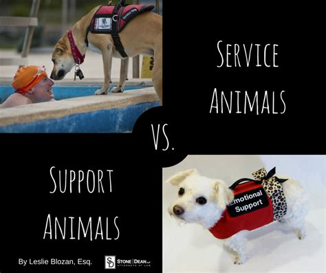 emotional support vs service service animals vs emotional support animals dean