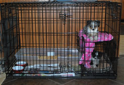 how to make a dog use the bathroom outside puppy using bathroom in crate 28 images puppy using