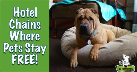 hotel chains that allow dogs pet friendly hotel chains where pets stay free gopetfriendly