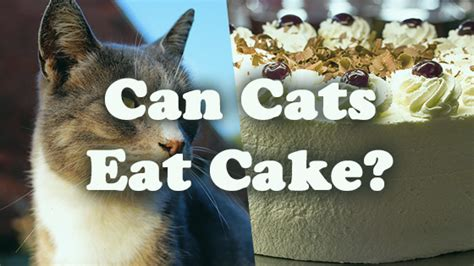 can dogs eat cake can cats eat cake pet consider