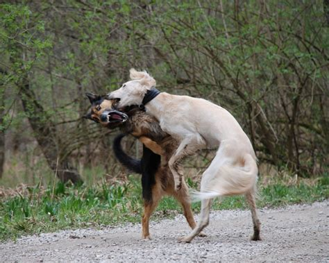 puppies fighting fights a to s best friend facts on abuse