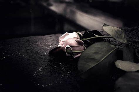 imagenes de flores goticas imagenes goticas rosas taringa