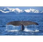 Whale Watching In The Midnight Sun  Holidays 2017/2018 Best Served