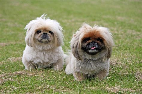 dogs free stock photo domain pictures