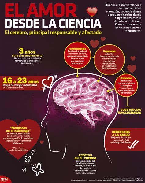 imagenes visuales para el cerebro hoy tamaulipas infograf 237 a el amor desde la ciencia el