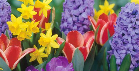 fotografie di fiori primavera primi fiori di primavera radio company easy