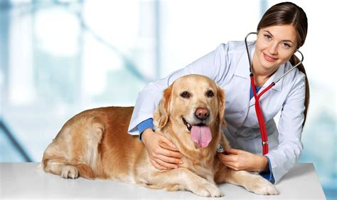 flea remedies for puppies best otc flea treatment for dogs