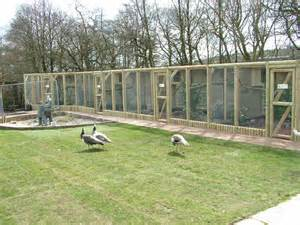 Backyard Zoo New Pheasant Aviaries At Blackbrook Apr 09 187 Blackbrook