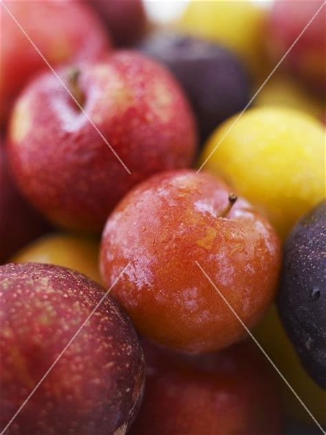 different types of plums buy images stockfood