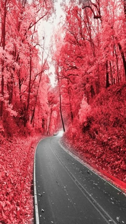 pink forest  tumblr