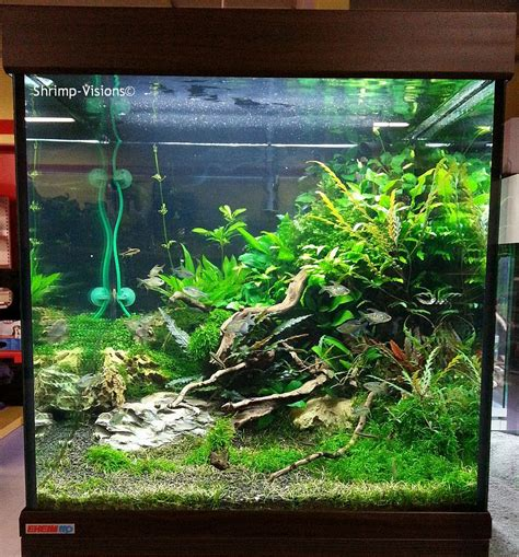 betta aquascape aquascaping nano cube hledat googlem betta tank