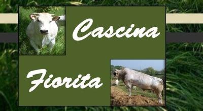 azienda agricola la fiorita allevamento bovini razza piemontese bagnolo piemonte cuneo