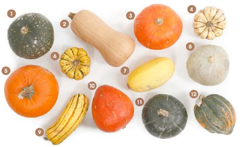 visual guide winter squash 612