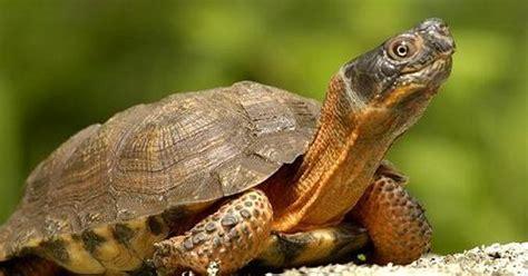 google images turtle turtle image google search animals pinterest