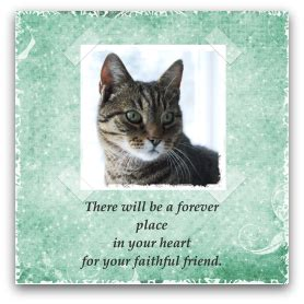 cat sympathy cards
