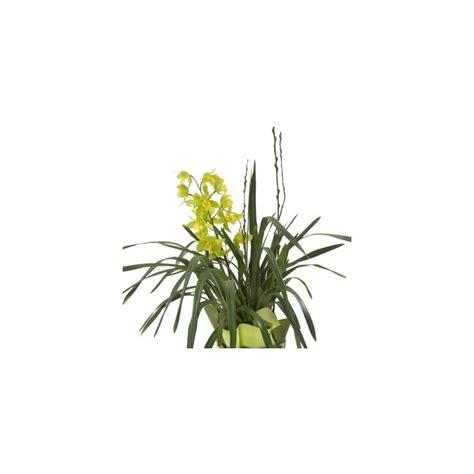 orchid cymbidium plant delivery patras city milva flowers