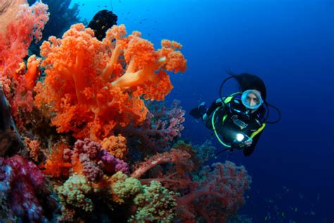 dive fiji fiji is considered the destination for